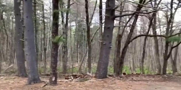 Police Search for Man Who Exposed Himself on Framingham Hiking Trail – NBC Boston